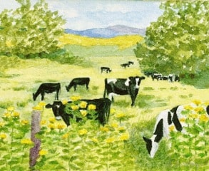 Shanley - Cows in Pasture 2015_best copy[1]