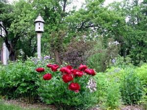 cider hill gardens copy